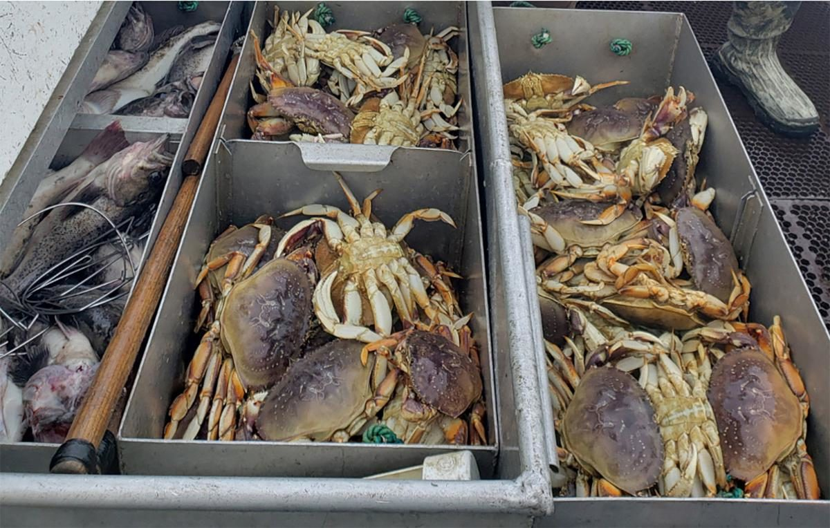 Ocean acidification threatens Dungeness crabs, lucrative fishery
